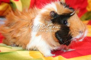 купить свинку диетолога в интернет магазине